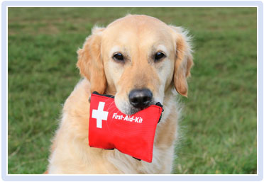 Dog with First Aid Kit